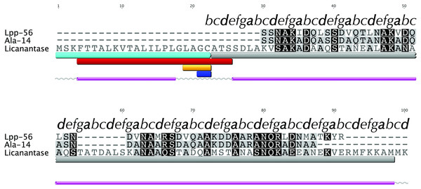Multiple alignment with related sequences and sequence-based predictions for Licanantase.