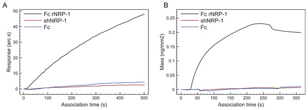 Comparison of polysaccharide-binding properties of Fc rNRP-1, shNRP-1 and Fc.