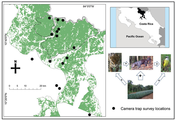 Map of camera trap survey locations and the forest cover (including primary, secondary, and tree plantations) within the San Juan – La Selva Biological Corridor and its relative location in Costa Rica.