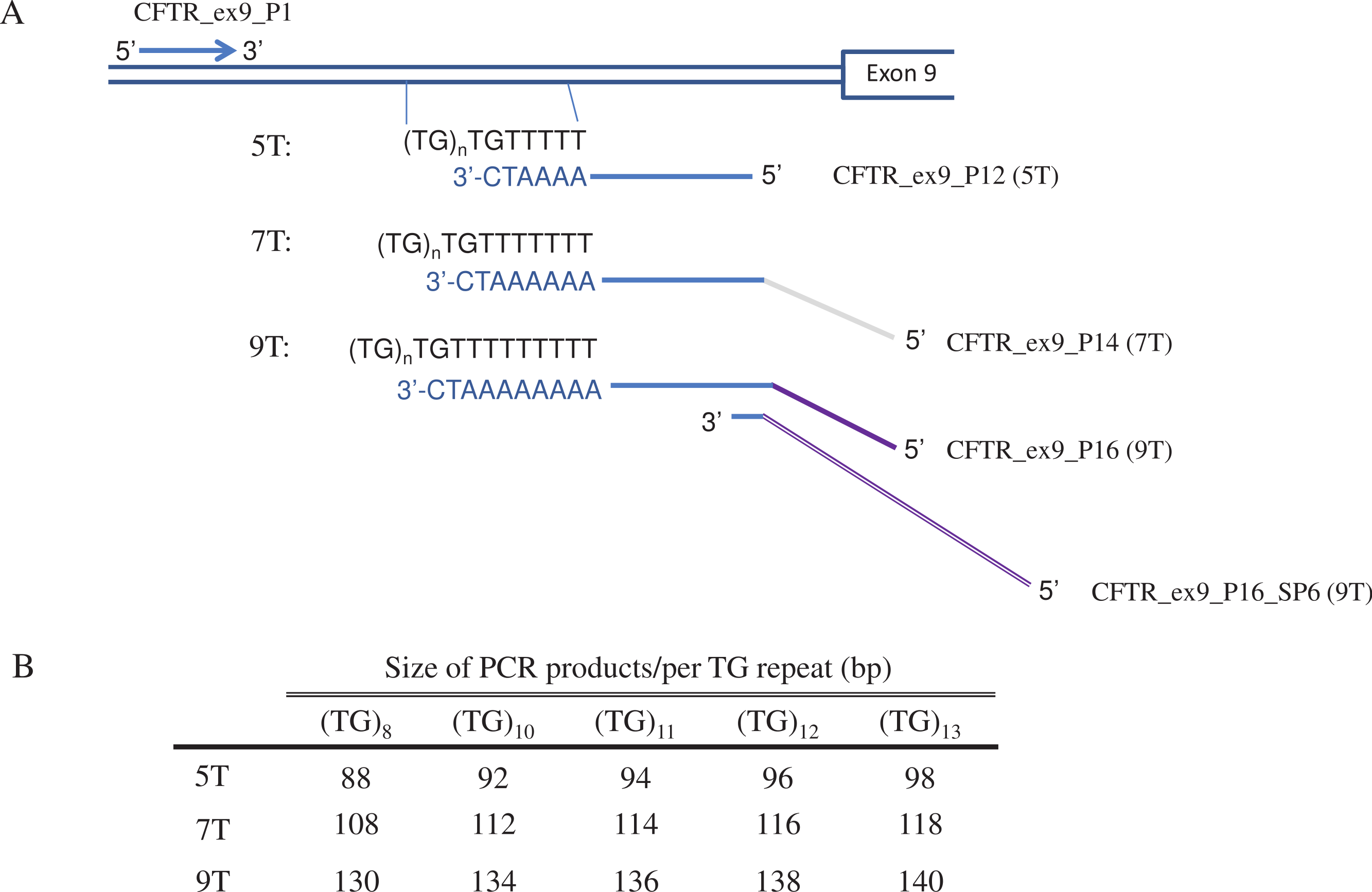 Development Of Allele Specific Multiplex Pcr To Determine The Length Of Poly T In Intron 8 Of Cftr Peerj