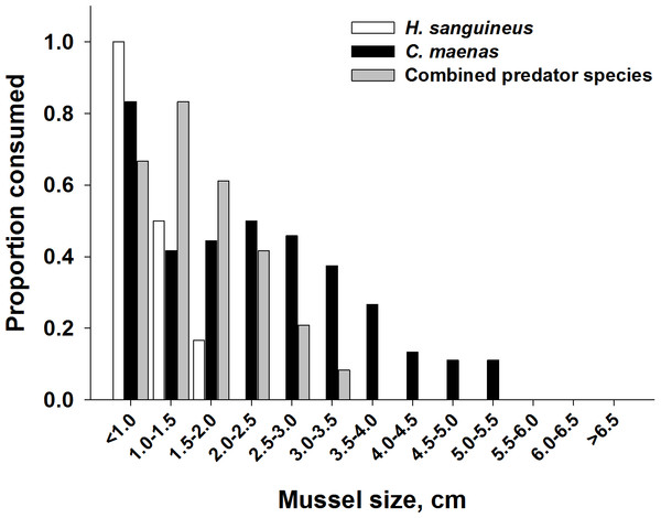 Impact of heterospecific predators on reducing the size of mussels being consumed.