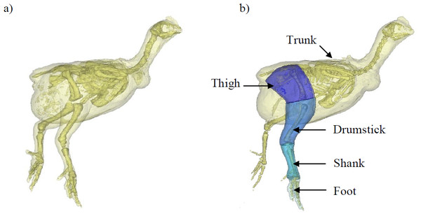 A 3D model representation of the broiler showing the body and pelvic limb segments.
