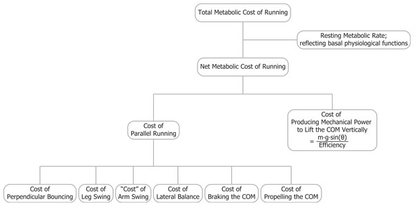 The total metabolic cost of running is comprised of several components.