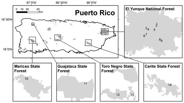 Locations surveyed acoustically for frogs in Puerto Rico.