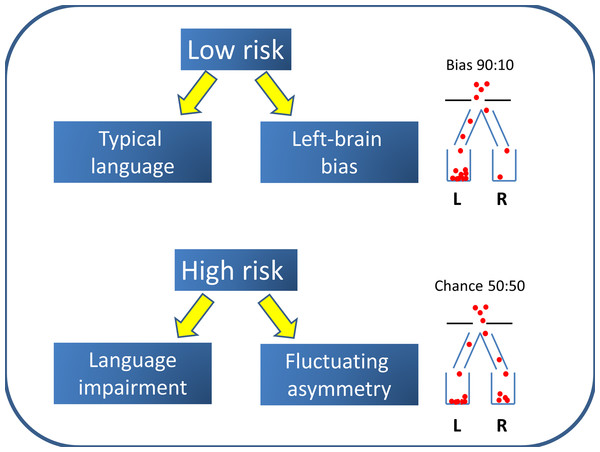 Left Brain Bias model.