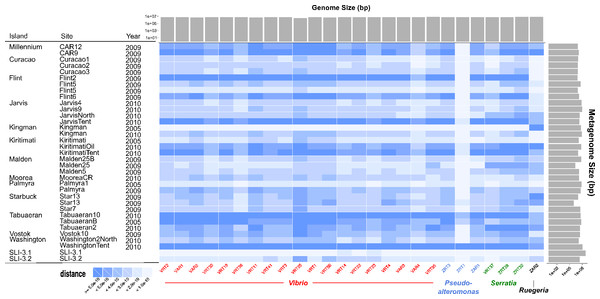 Heatmap comparing all genomes sequenced to Line Islands metagenomes.