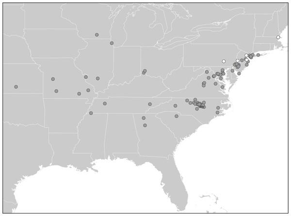 Distribution of Diestrammena species in American houses.
