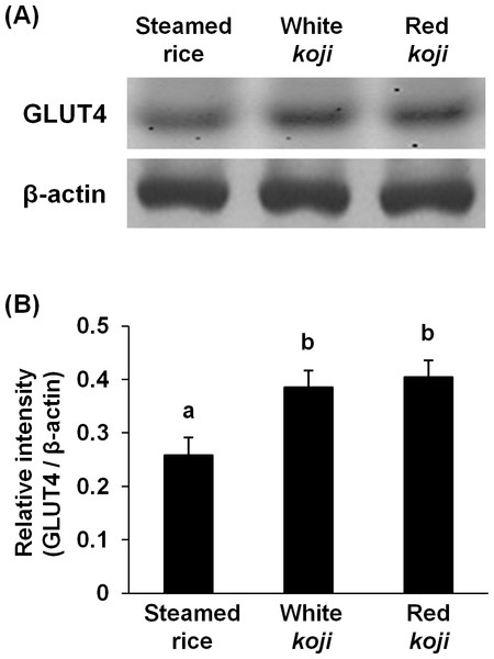 Glucose transporter type 4 (GLUT4) protein levels in L6 myotube cells treated with each sample extracts.