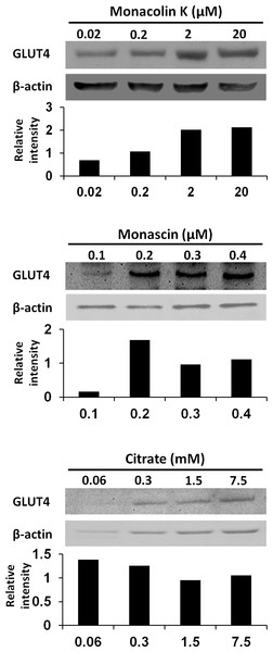 GLUT4 protein levels in L6 myotube cells treated with each compounds.