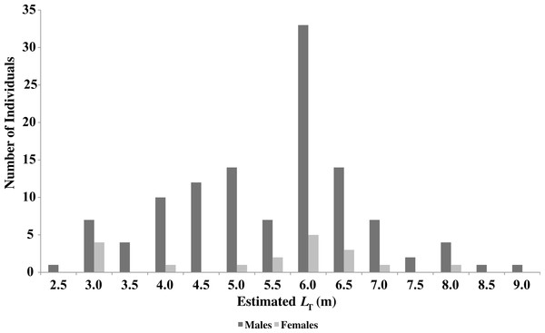 Sex and size distribution of R. typus identified in Oslob.