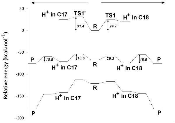 Potential energy surfaces of proton and electron transfer events in light-independent PChOR, computed at the D3-B3LYP/6-311G(+)(d,p)//B3LYP/6-31G(d) level of theory with ε = 10.