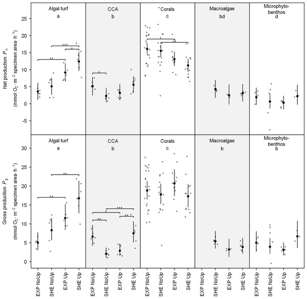 Individual net and gross production of benthic functional groups.