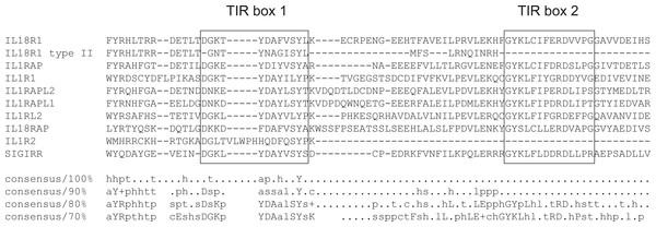 Multiple sequence alignment of human IL-1 receptor family members.