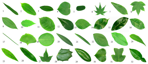 Samples of plants.