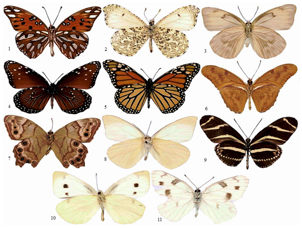 Samples of butterflies.