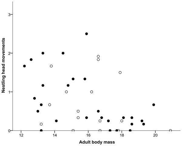 Correlation between adult body mass and nestling head movements.