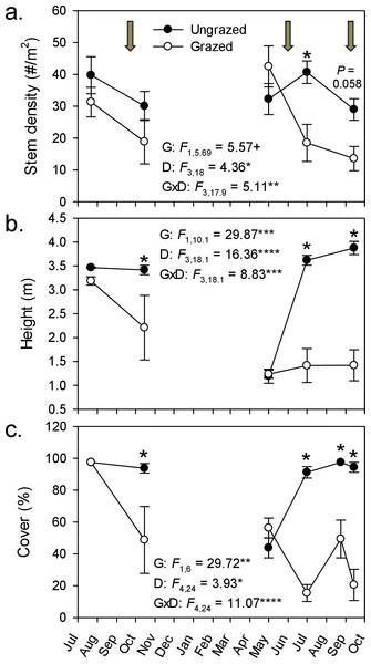 Goat grazing impacts on Phragmites.