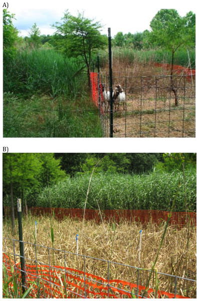 Images of goat grazing impacts.