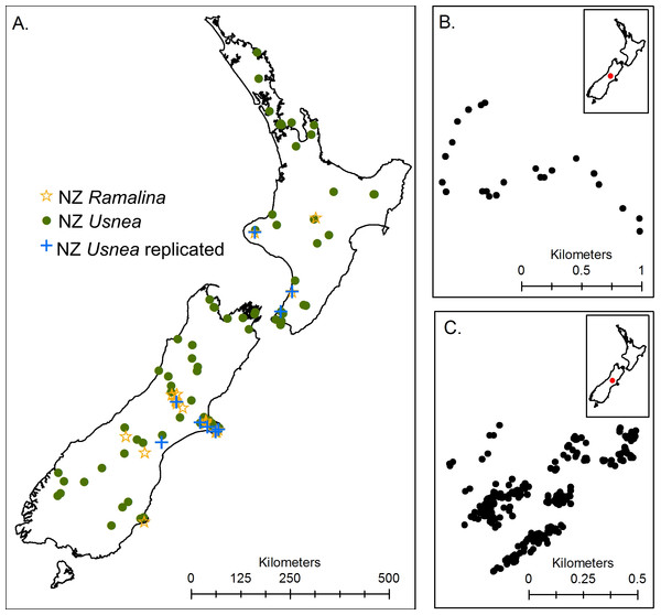 Maps showing sample collection locations for (A) the three New Zealand datasets, (B) the Craigieburn Usnea dataset and (C) the Flock Hill community and Usnea dataset.