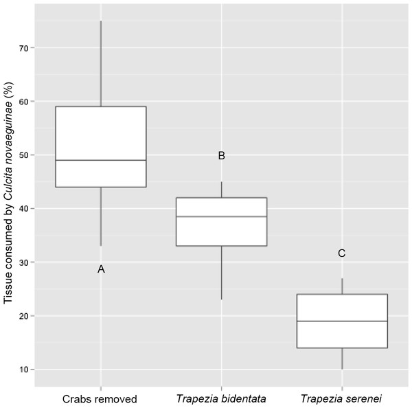 Percentage of coral tissue volume proxy consumed by Culcita novaeguineae in corals hosting the large size-class of Trapezia bidentata and Trapezia serenei.