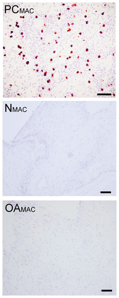 Immunohistochemical analysis for macrophages.