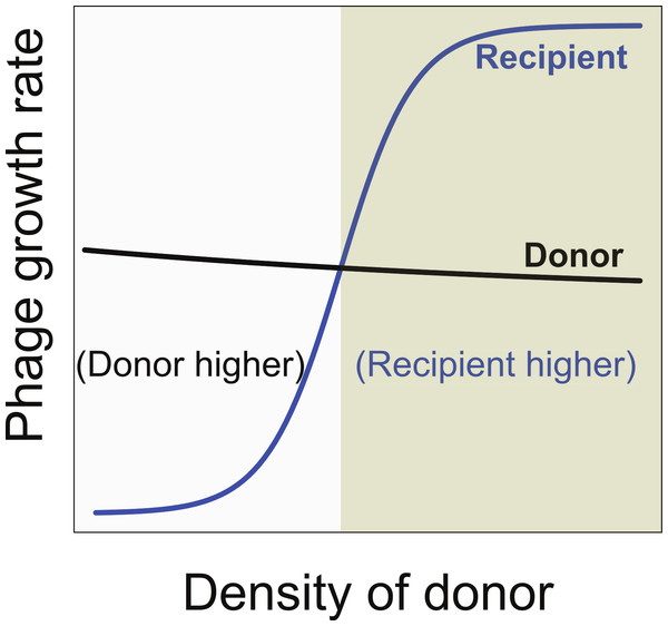 Necessary conditions for the long term co-maintenance of two phages (donor and recipient).