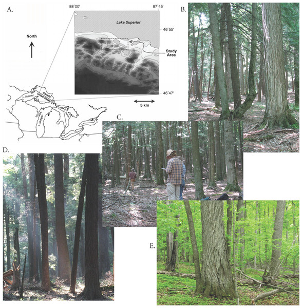 Study area and examples of forest types.