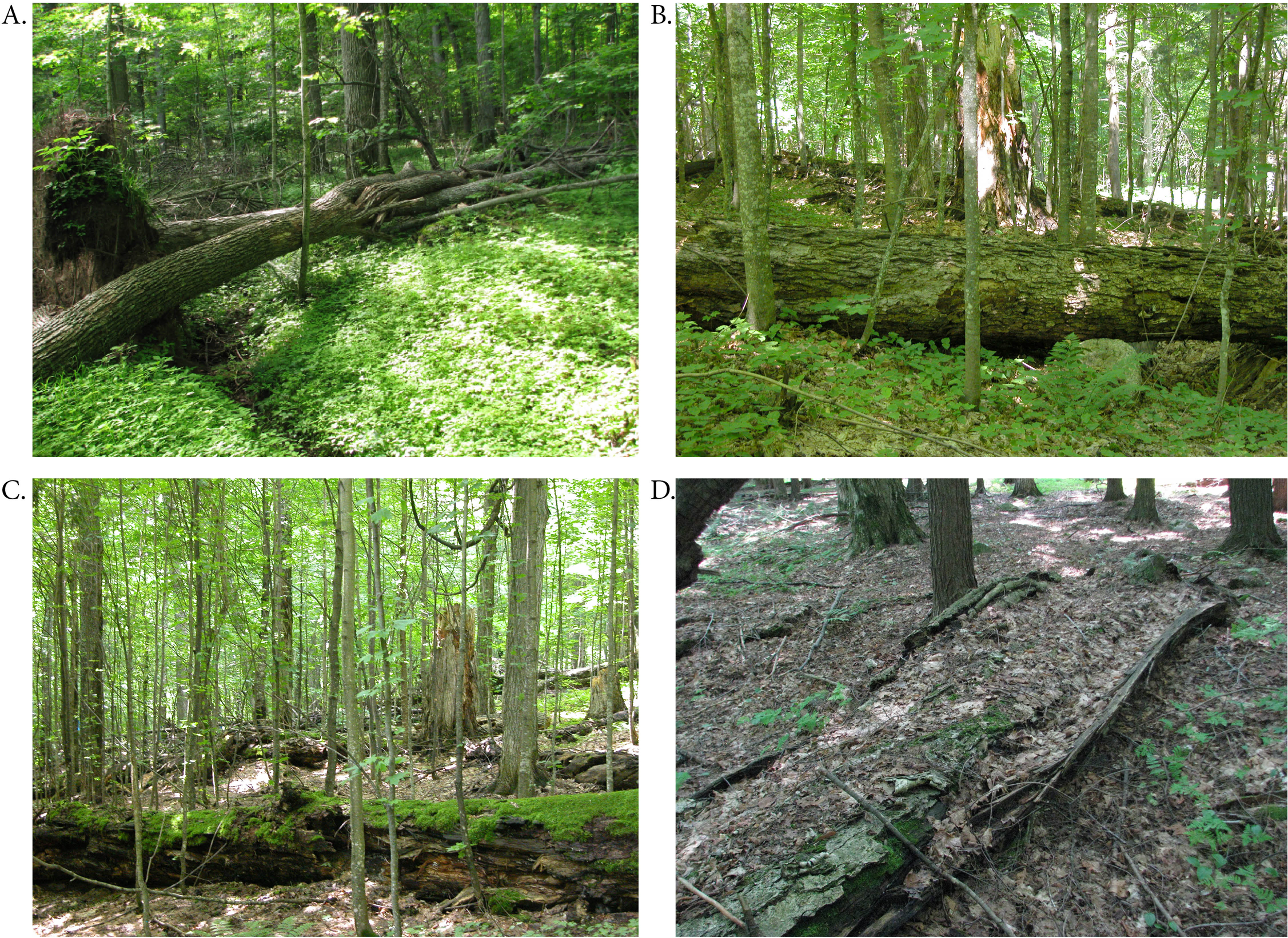 Multi Decade Biomass Dynamics In An Old Growth Hemlock Northern