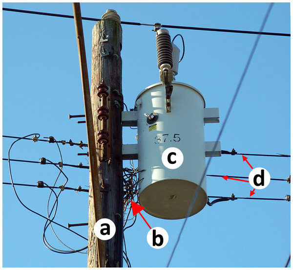 Beginnings of a Monk Parakeet nest on a utility pole.