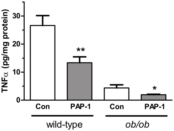 Effect of PAP-1 (3 µM) on TNFα secretion by adipocytes from female wild-type and ob/ob mice.