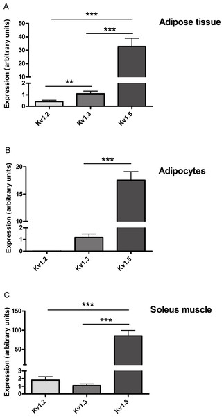 Relative expression of Kv1.2, Kv1.3 and Kv1.5 expression in (A) adipose tissue, (B) adipocytes and (C) soleus muscle of wild-type mice.