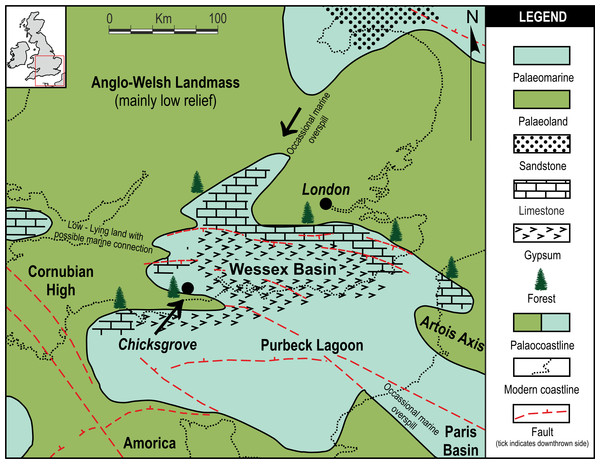 Local palaeogeographic map showing position of Chicksgrove in relation to the Purbeck Lagoon, and the final Jurassic Purbeck regression with evaporites in Southern England.