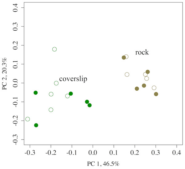 A PCoA of the OTU diversity of tidepool rock versus coverslip substrates at Second Beach, WA.