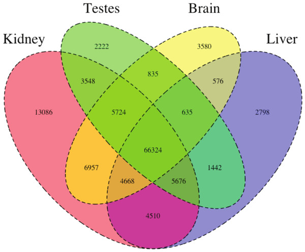 The Venn Diagram, which provides a visual representation of the overlap of expression of the four tissue types.