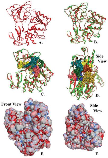 NS3 Model of the Greek Goat Encephalitisvirus helicase.