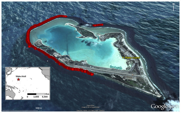 Location of surveys for Bolbometopon muricatum with scuba, snorkel, and towed-divers conducted between 12 and 25 August 2011 at Wake Atoll.