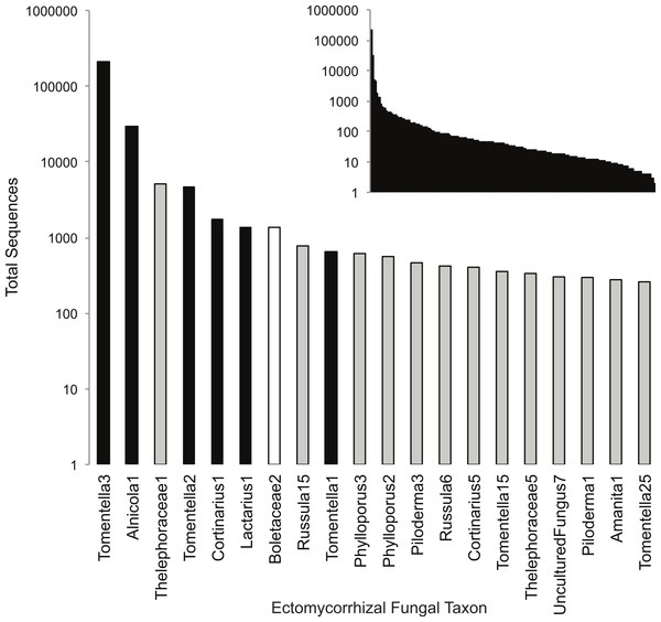 Rank-abundance plot of all 190 (inset) and top 20 ectomycorrhizal (ECM) fungal taxa sampled in this study.