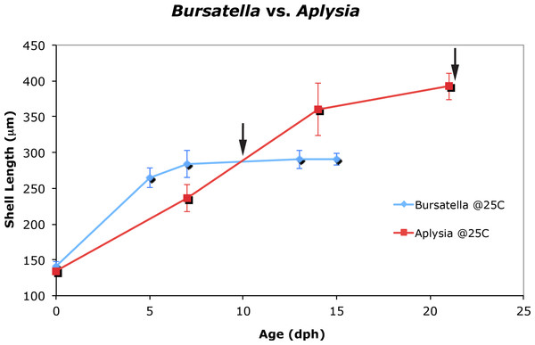 Larval and juvenile growth of Bursatella leachii and Aplysia californica in laboratory settings.