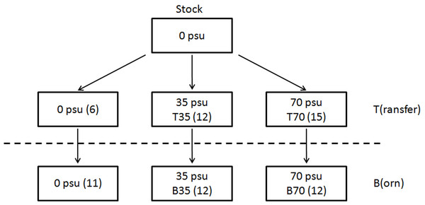 Origin of the 2 series of experimental animals considered in this study, which both originated from a single stock maintained in captivity in freshwater since ∼15 years.