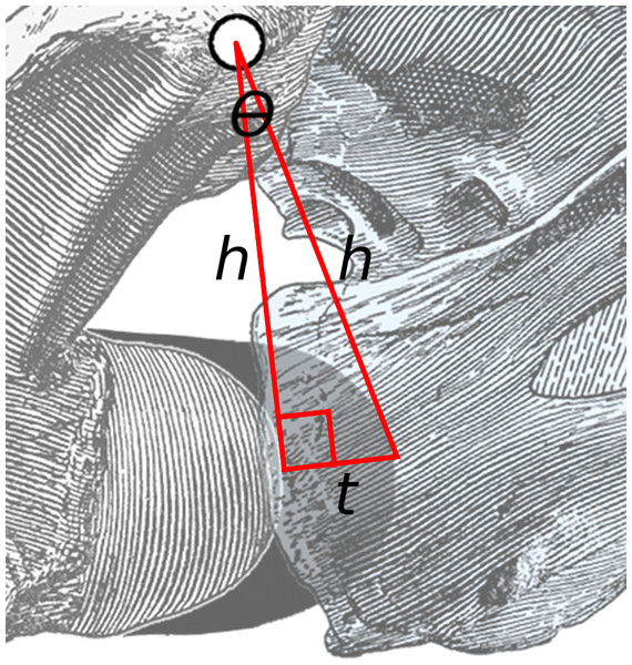 Close-up of area of rotation in Fig. 2.