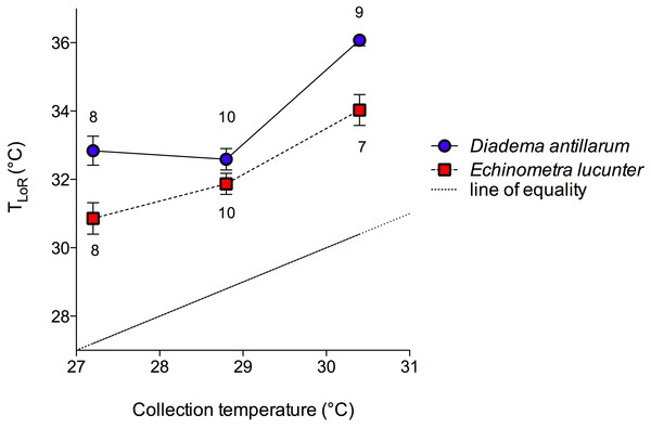 Temperature at the loss of righting (TLoR) of D. antillarum and E. lucunter at different collection temperatures.
