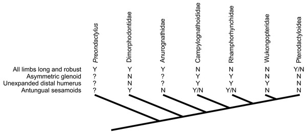 Distribution of characteristics linked to terrestrial capabilities in non-pterodactyloids in a simplified pterosaur phylogeny (based on Lü et al., 2012).