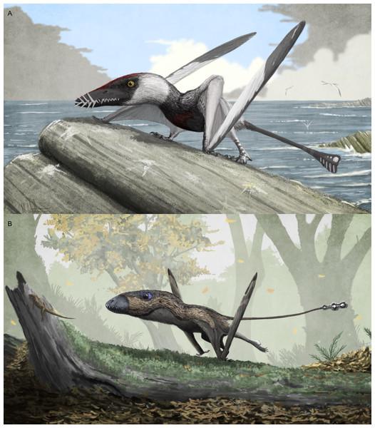 were early pterosaurs inept terrestrial locomotors   peerj