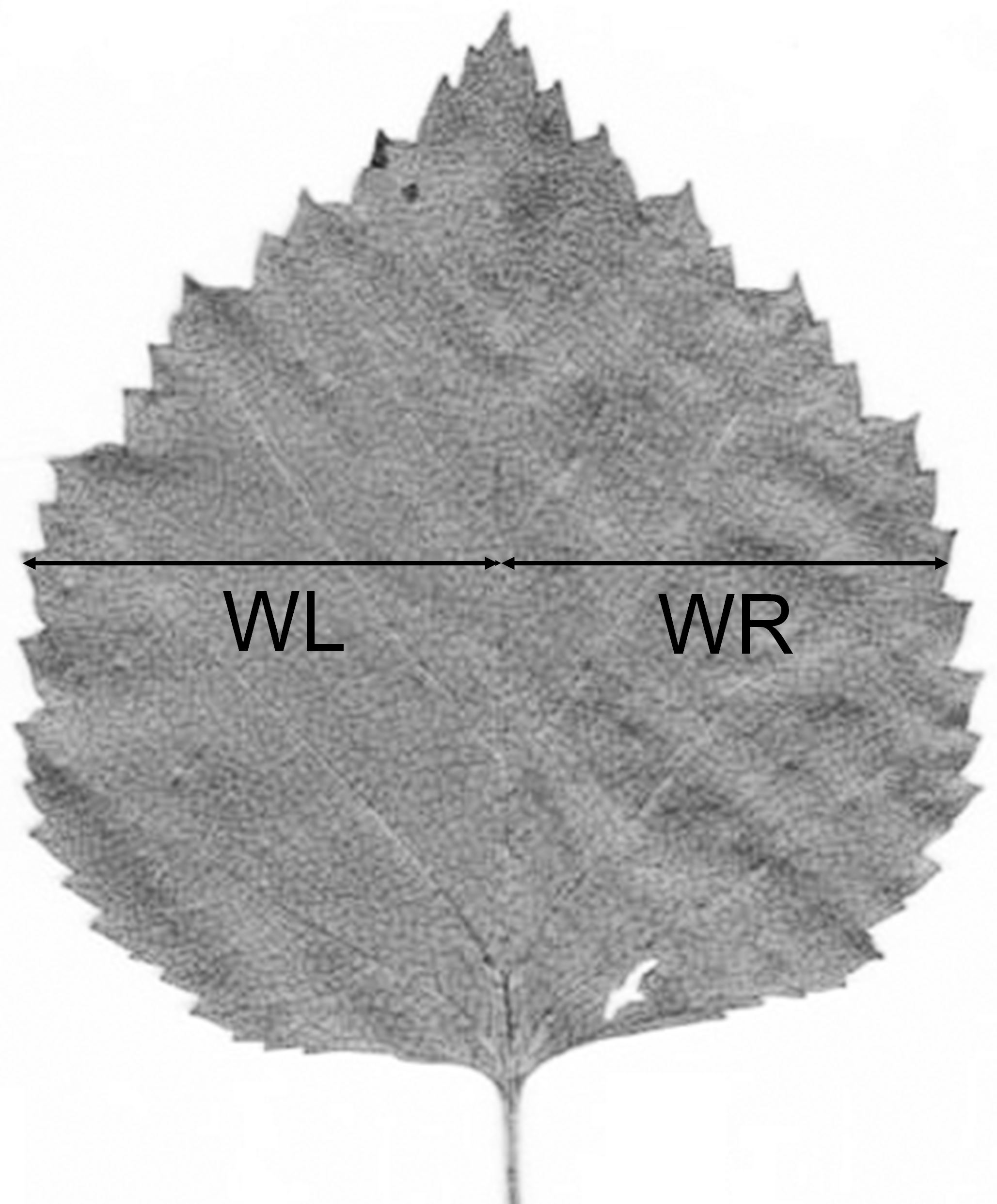 how reproducible are the measurements of leaf fluctuating