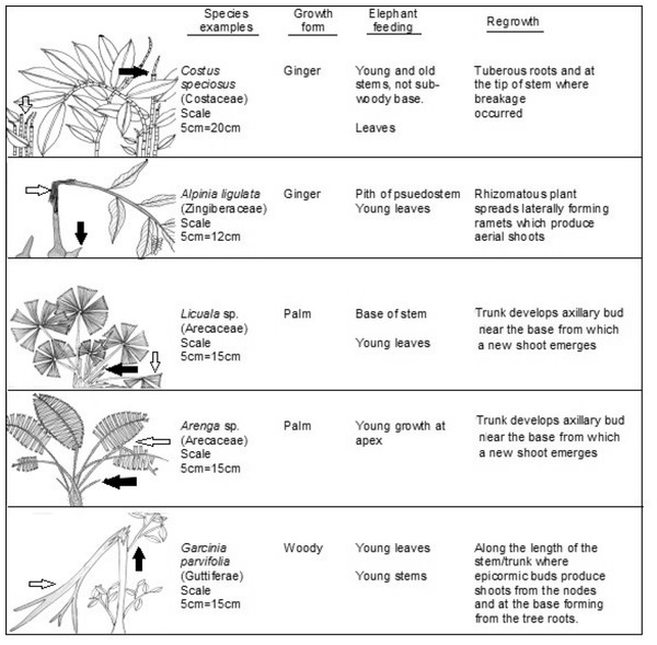 Typological examples of plant growth forms.