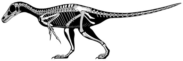 Skeletal reconstruction of Balaur.