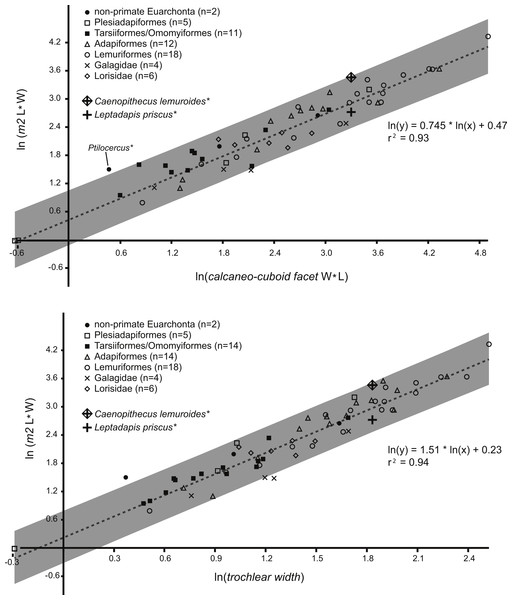 Regression of tooth size on tarsal facet size.