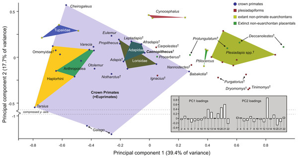 Principal components analysis of astragalar shape variables and angles.