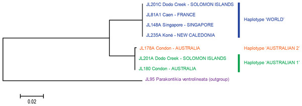 Platydemus manokwari: tree based on long COI sequences.