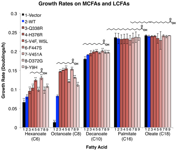 FadD mutants enhance the growth rate of E.coli ΔfadR on the MCFAs hexanoate, octanoate, and decanoate, but not on palmitate and oleate.